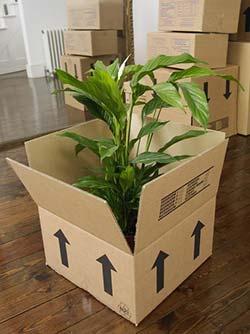 spullen inpakken voor verhuis