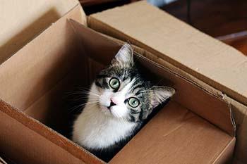 verhuizen met kat