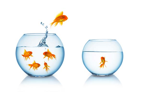 verhuizen met vissen